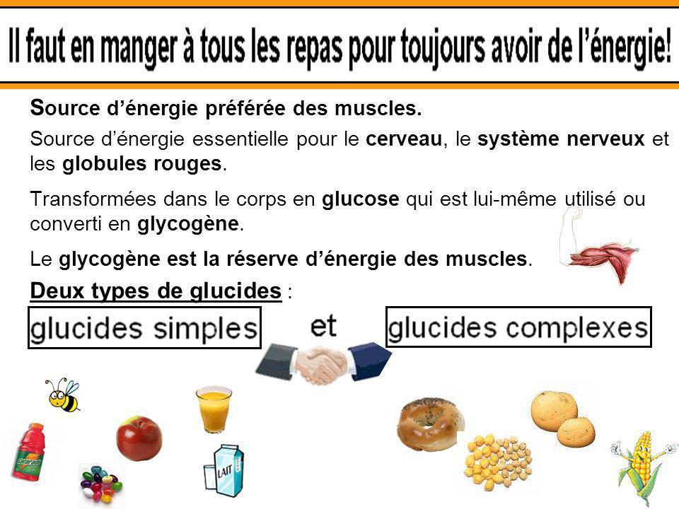 3.1 Les glucides Source d'énergie préférée des muscles.