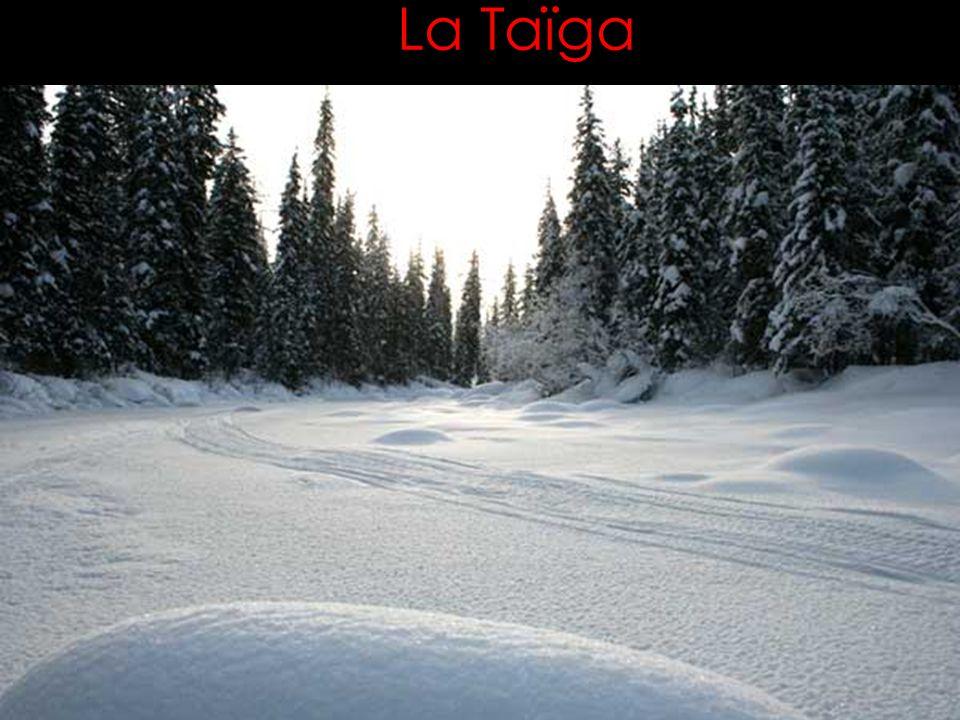 La Taïga