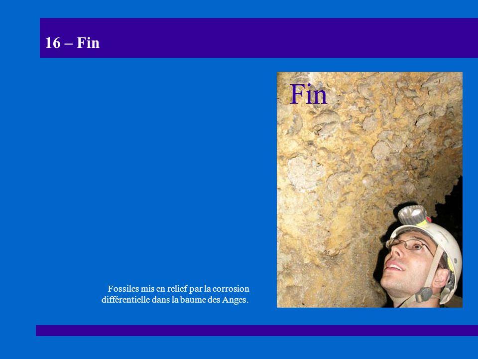 16 – Fin Fin Fossiles mis en relief par la corrosion différentielle dans la baume des Anges.
