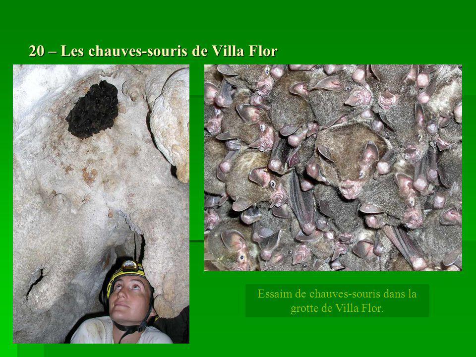 20 – Les chauves-souris de Villa Flor