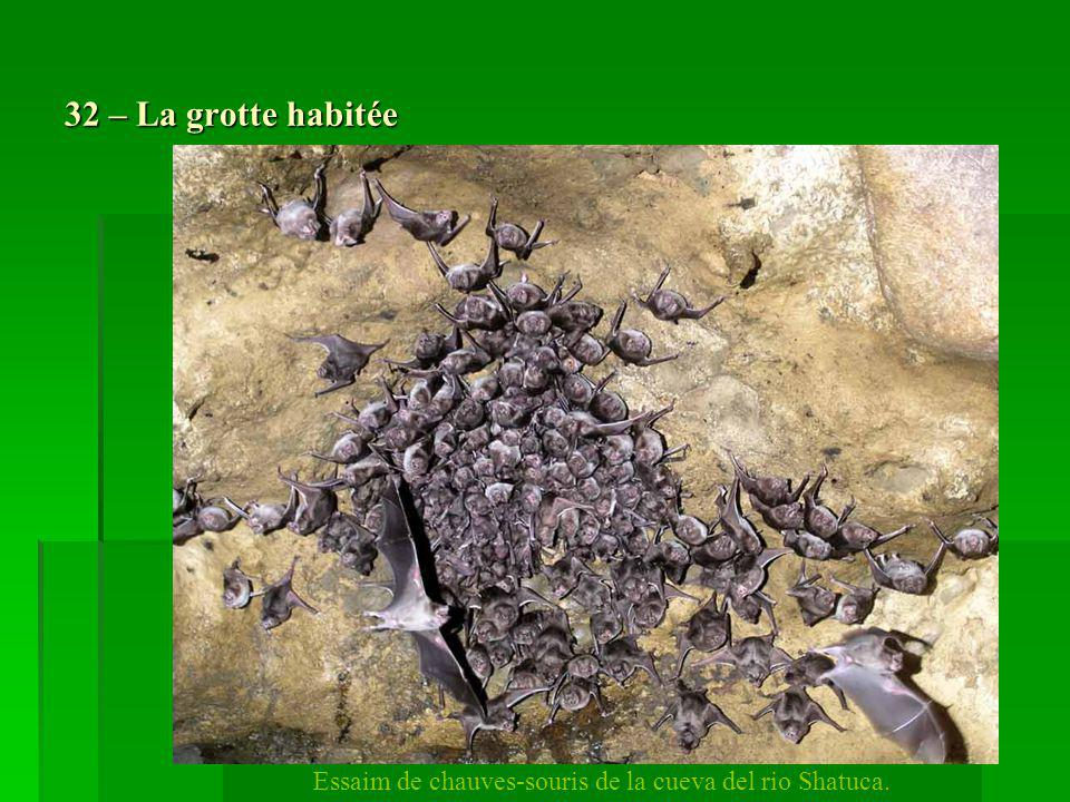 Essaim de chauves-souris de la cueva del rio Shatuca.