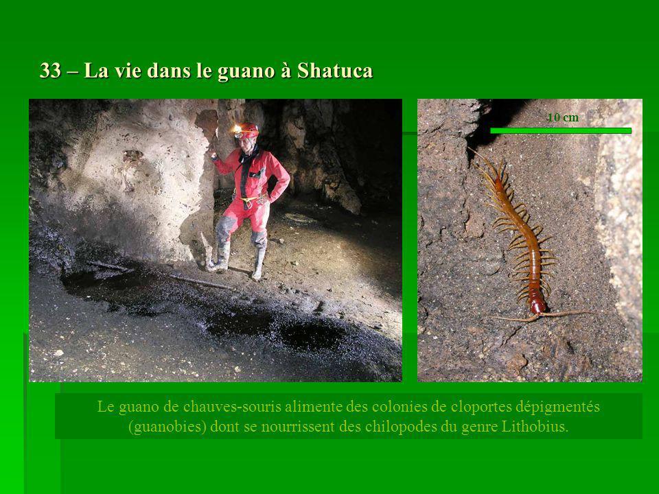 33 – La vie dans le guano à Shatuca