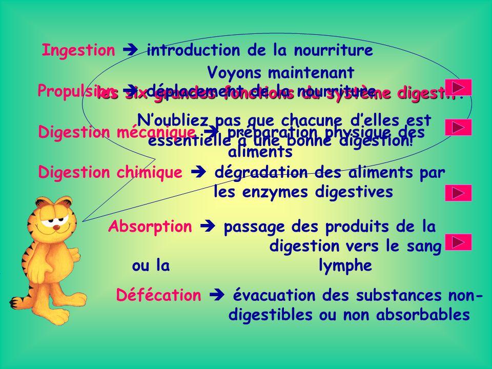 les six grandes fonctions du système digestif.
