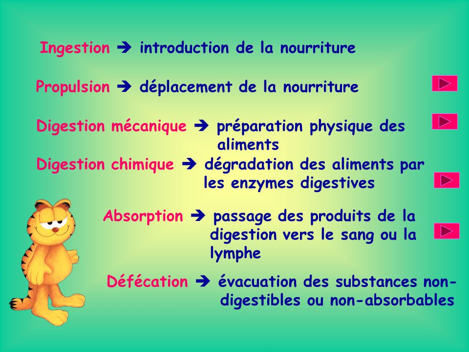 Ingestion  introduction de la nourriture