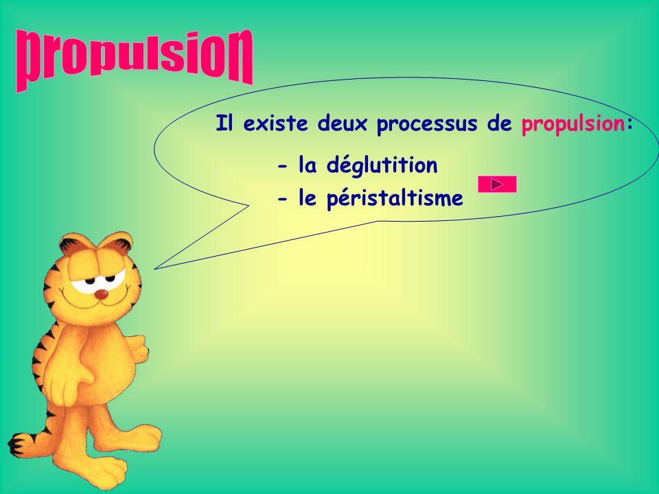 propulsion Il existe deux processus de propulsion: - la déglutition
