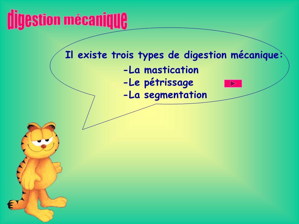 digestion mécanique Il existe trois types de digestion mécanique: