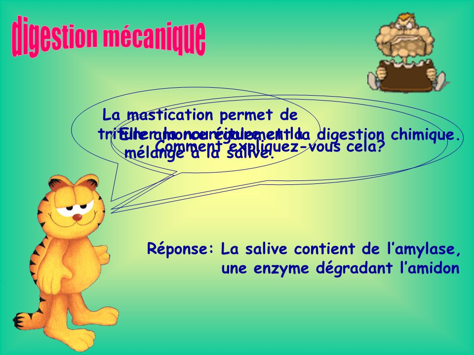 digestion mécanique La mastication permet de triturer la nourriture et la mélange à la salive. Elle amorce également la digestion chimique.