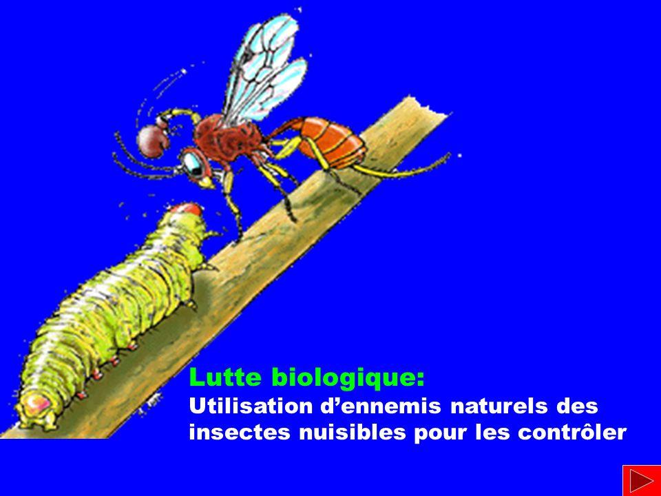 Lutte biologique: Utilisation d'ennemis naturels des insectes nuisibles pour les contrôler