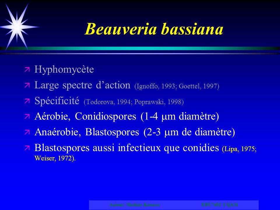 Beauveria bassiana Hyphomycète
