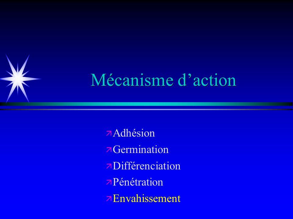 Adhésion Germination Différenciation Pénétration Envahissement