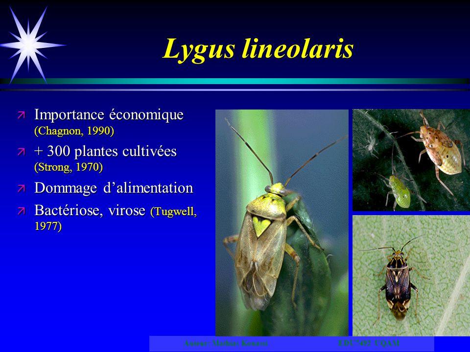 Lygus lineolaris Importance économique (Chagnon, 1990)