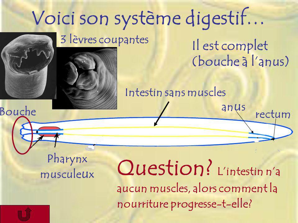 Voici son système digestif…