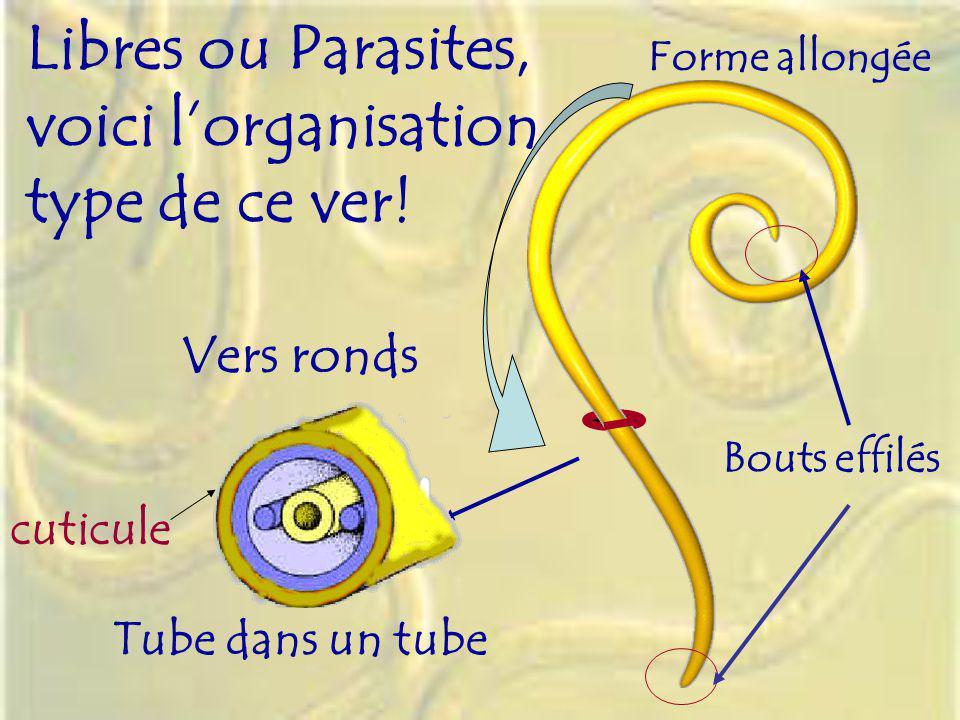 Libres ou Parasites, voici l'organisation type de ce ver! Vers ronds
