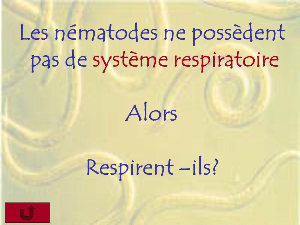 Les nématodes ne possèdent pas de système respiratoire