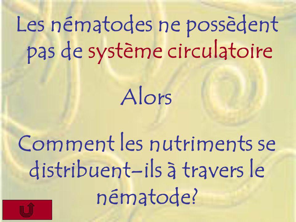 Les nématodes ne possèdent pas de système circulatoire Alors