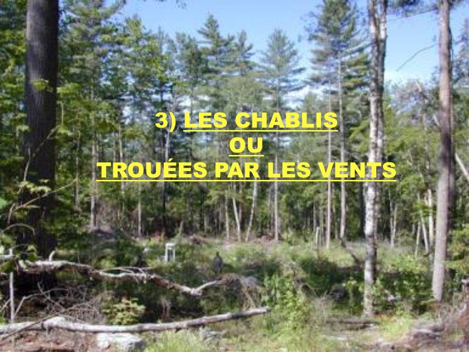 3) LES CHABLIS OU TROUÉES PAR LES VENTS