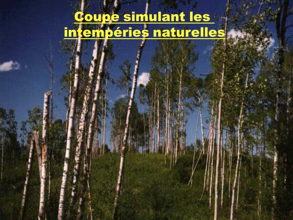 intempéries naturelles