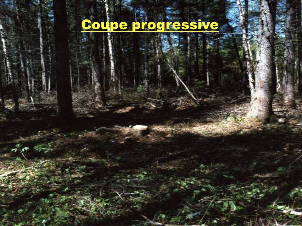 Coupe progressive