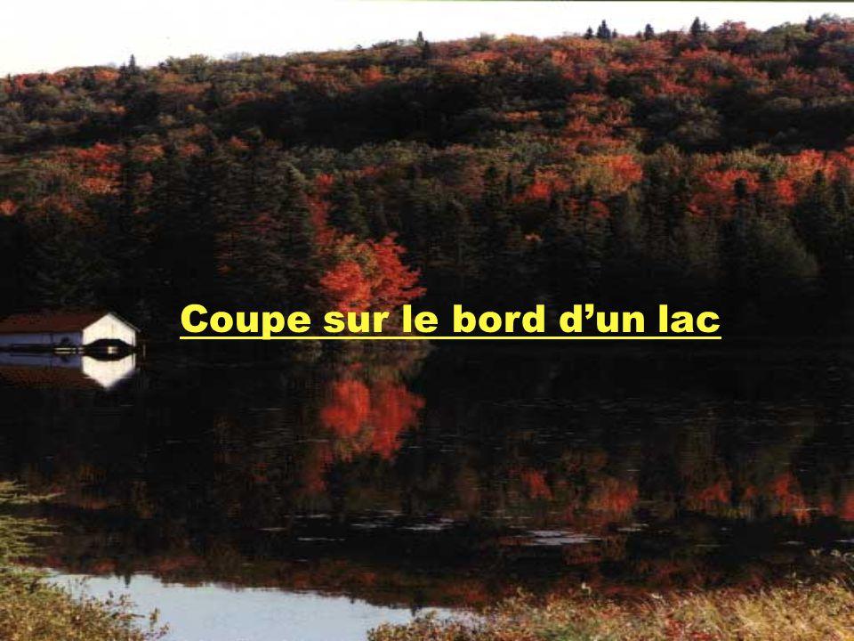 Coupe sur le bord d'un lac