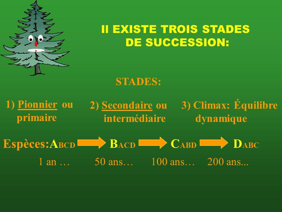 Espèces:ABCD BACD CABD DABC Il EXISTE TROIS STADES DE SUCCESSION: