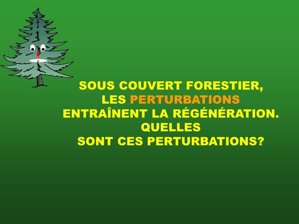 SOUS COUVERT FORESTIER,