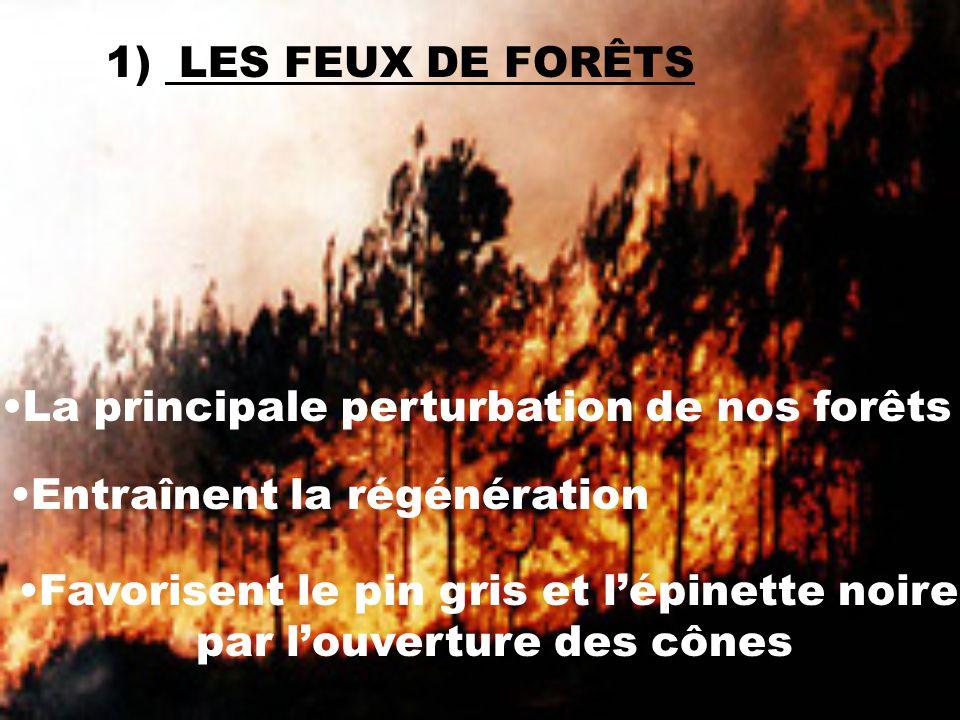 La principale perturbation de nos forêts