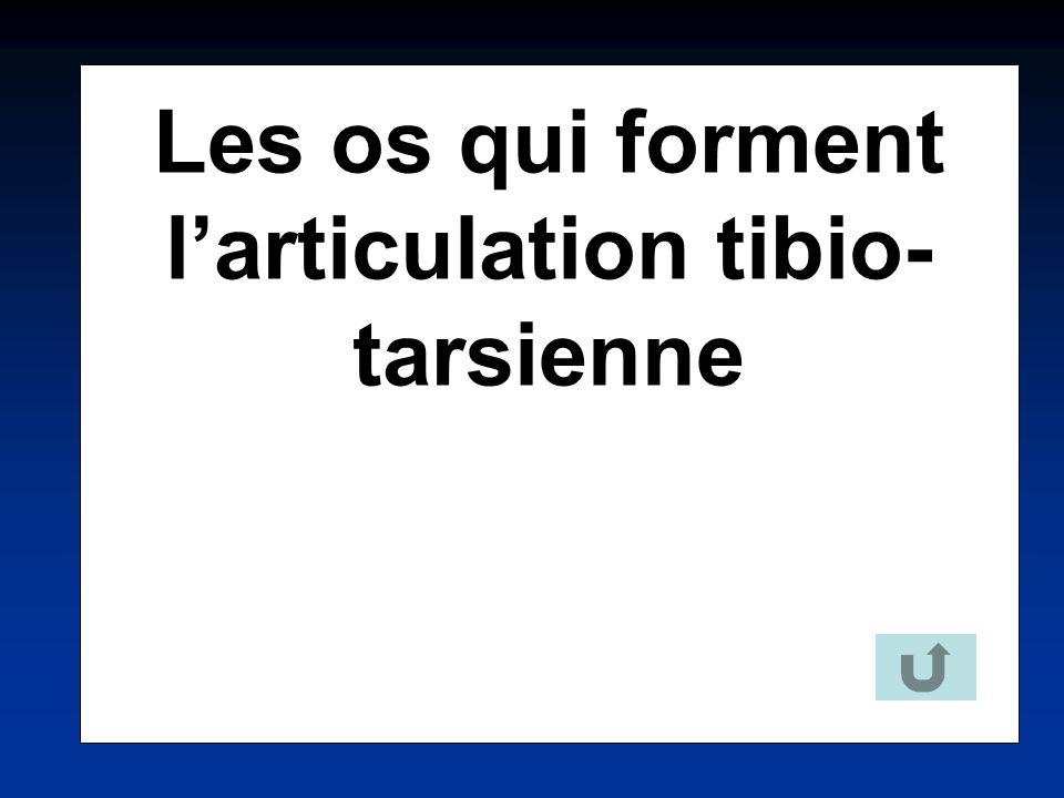 Les os qui forment l'articulation tibio-tarsienne