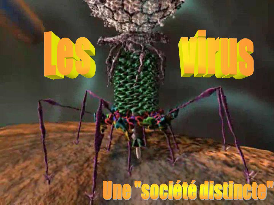 Les virus Une société distincte