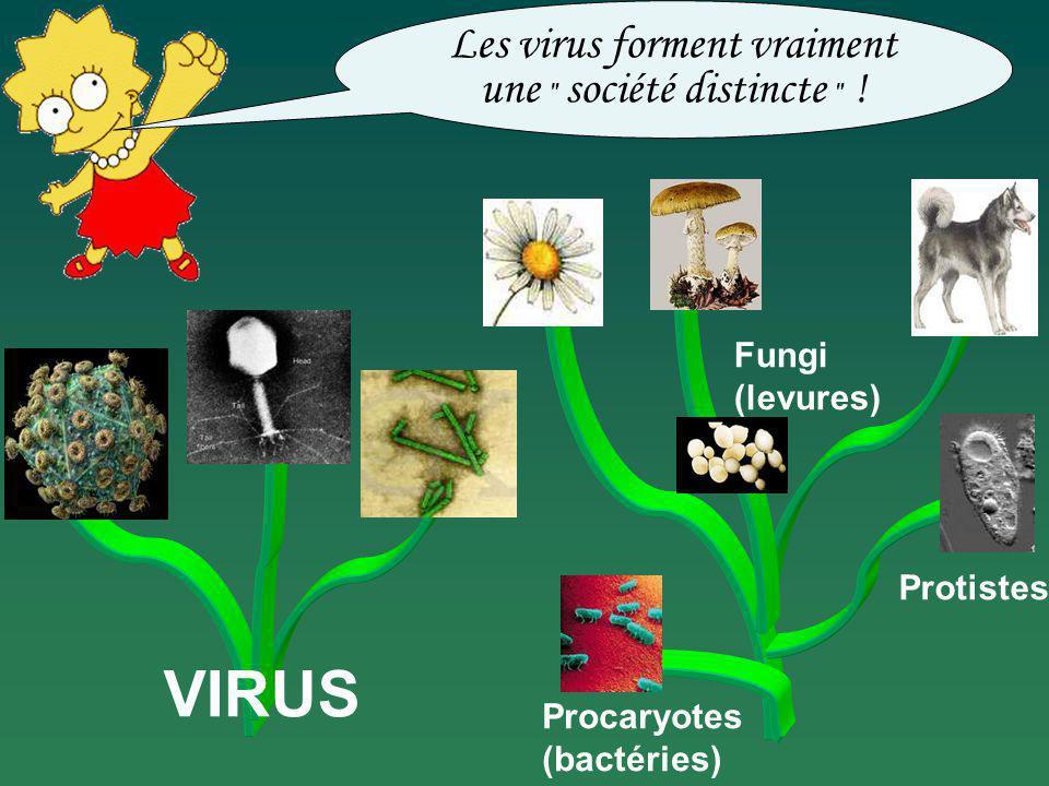 Les virus forment vraiment une société distincte !