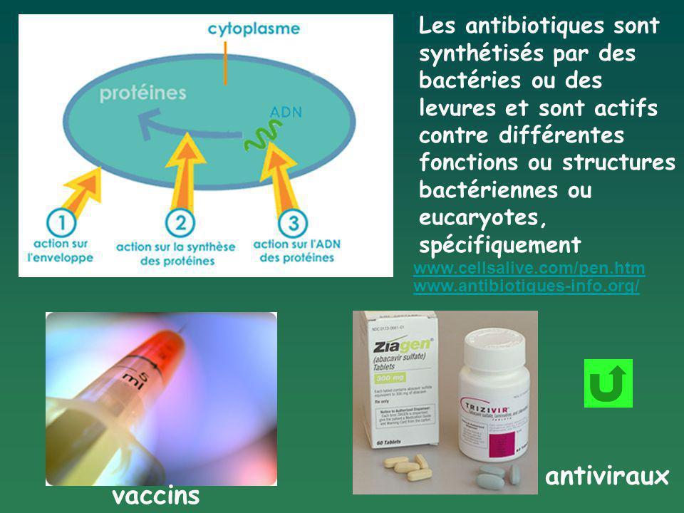 Les antibiotiques sont synthétisés par des bactéries ou des levures et sont actifs contre différentes fonctions ou structures bactériennes ou eucaryotes, spécifiquement