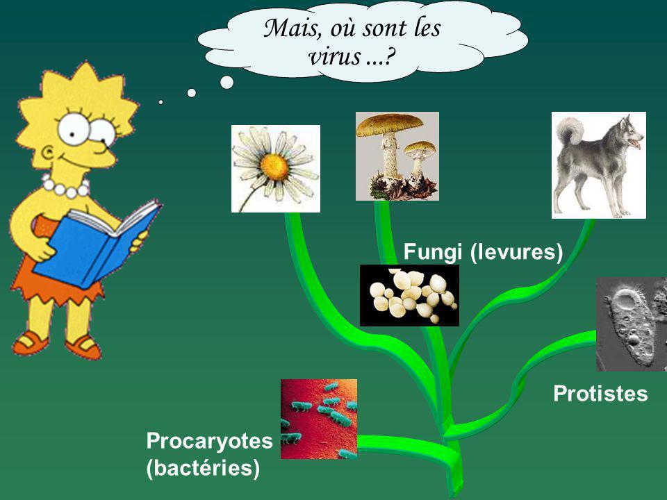 Mais, où sont les virus ... Fungi (levures) Protistes