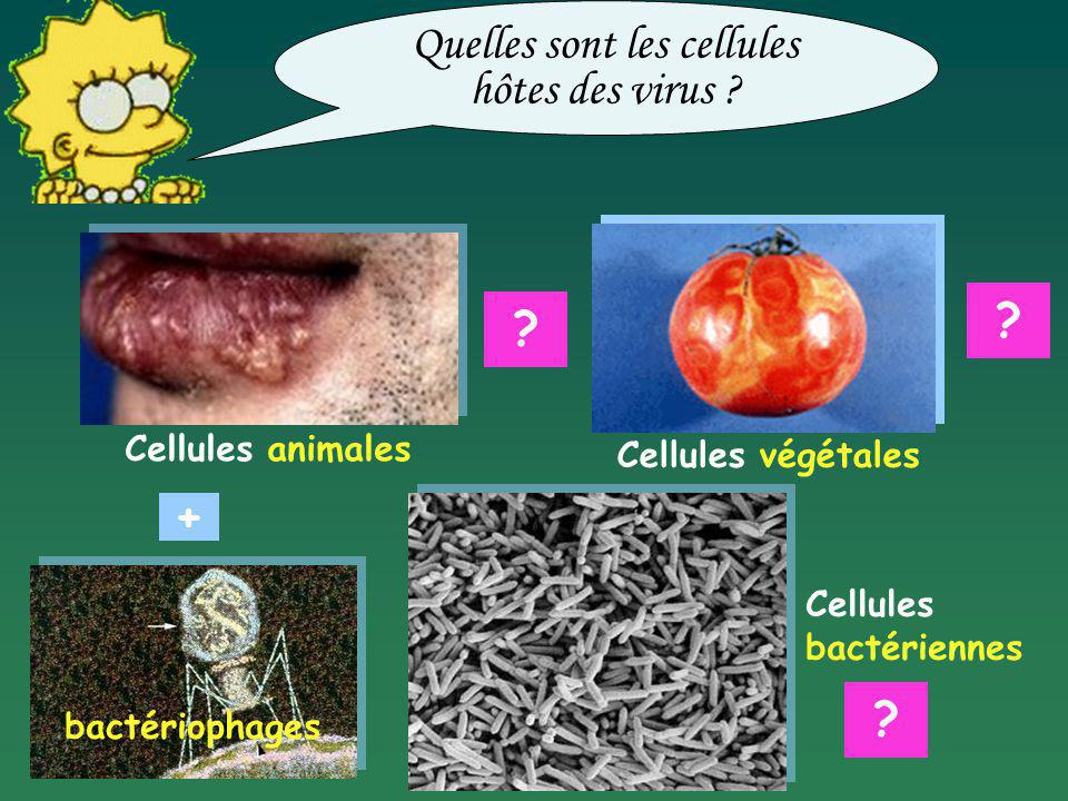 Quelles sont les cellules hôtes des virus
