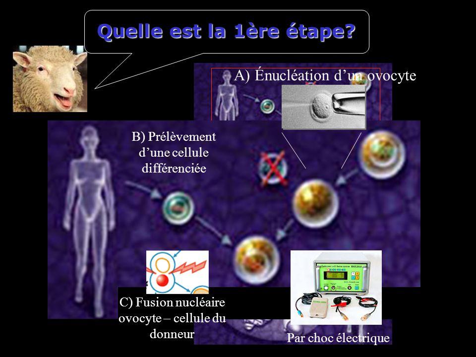 C) Fusion nucléaire ovocyte – cellule du donneur