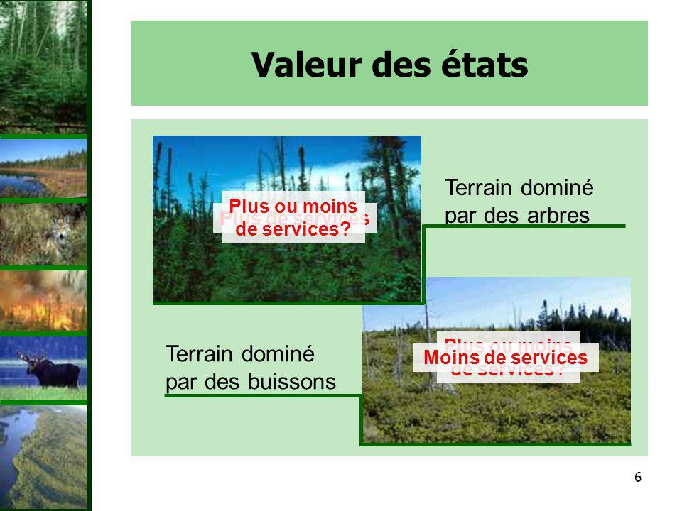 Valeur des états Terrain dominé par des arbres