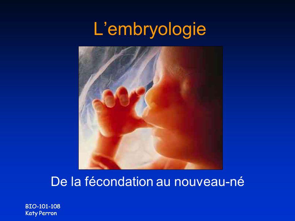De la fécondation au nouveau-né