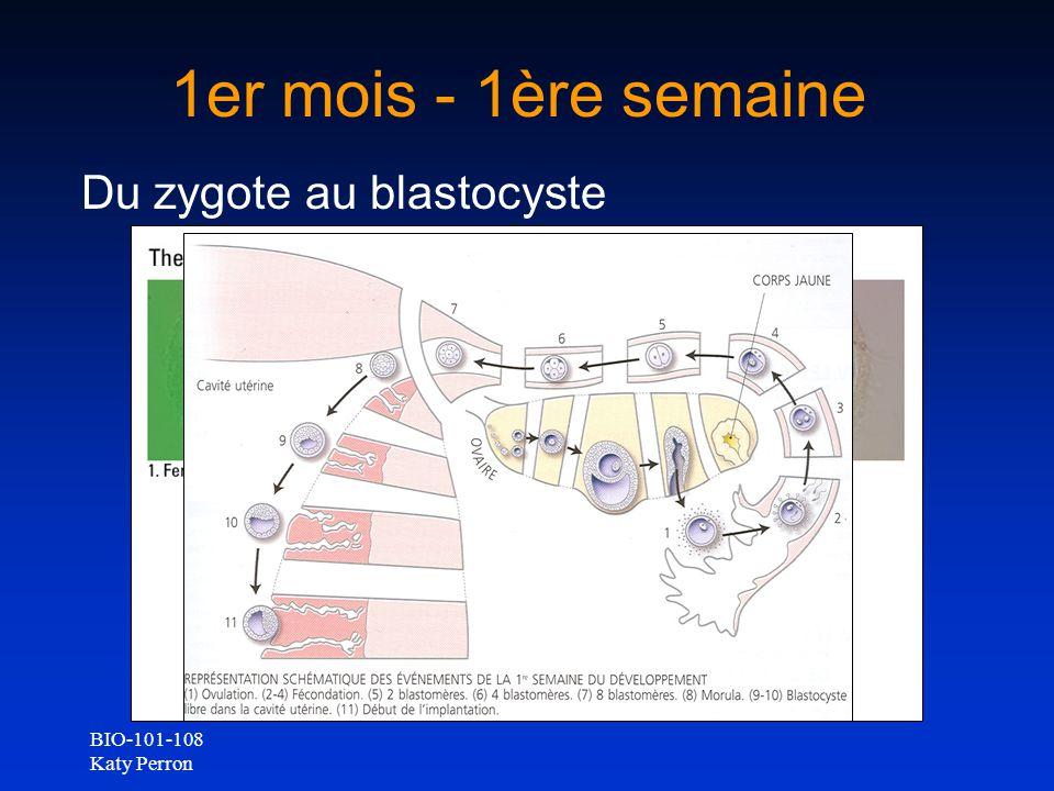 1er mois - 1ère semaine Du zygote au blastocyste