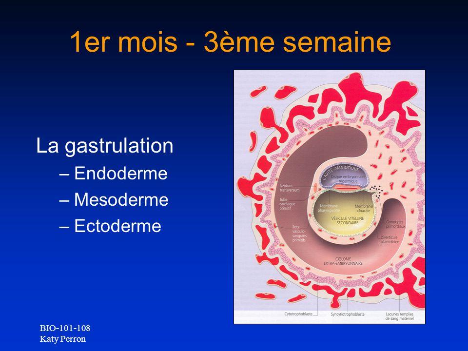 1er mois - 3ème semaine La gastrulation Endoderme Mesoderme Ectoderme