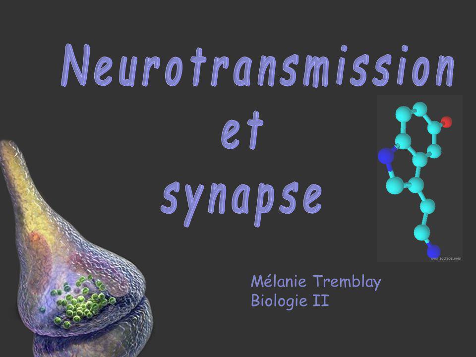 Neurotransmission et synapse Mélanie Tremblay Biologie II