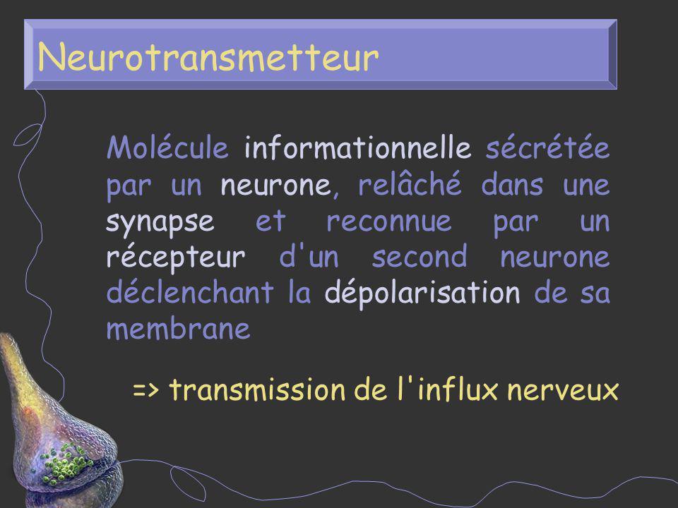 Neurotransmetteur