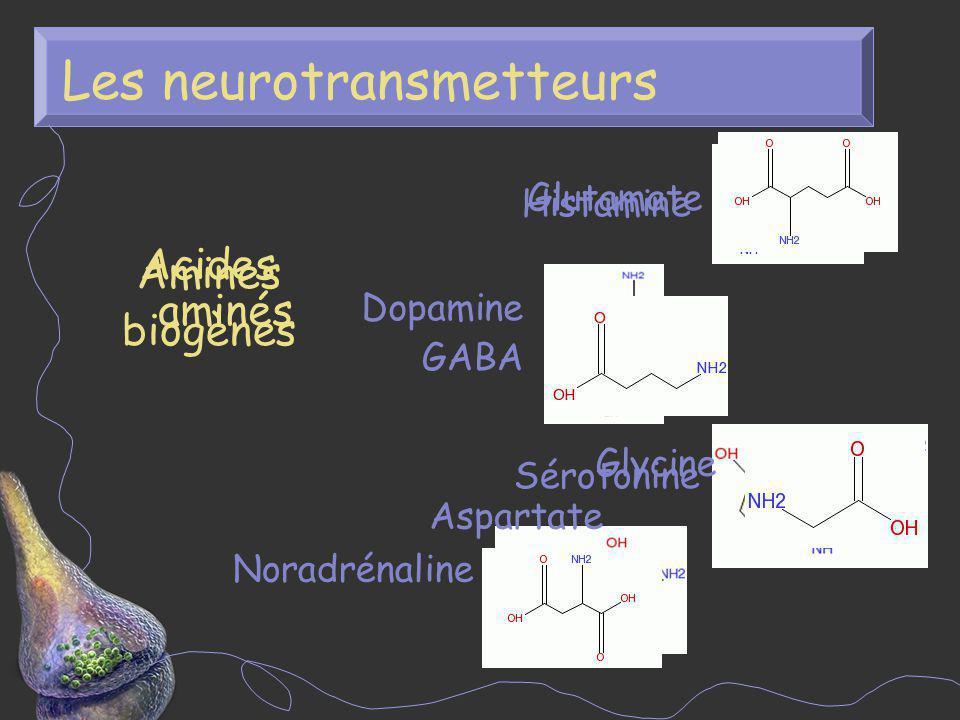 Les neurotransmetteurs