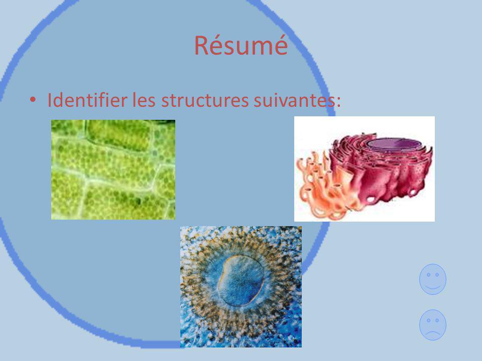 Résumé Identifier les structures suivantes:
