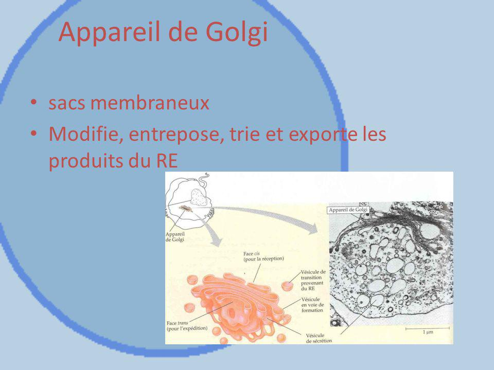 Appareil de Golgi sacs membraneux