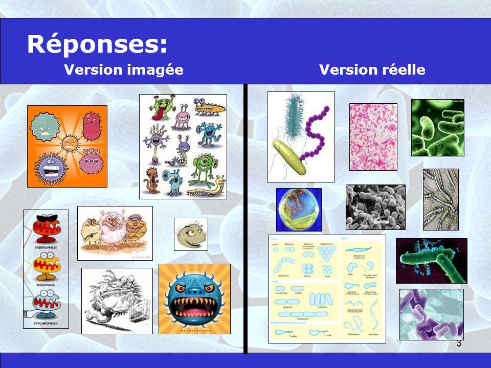 Réponses: Version imagée Version réelle