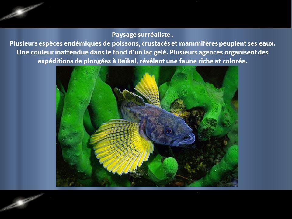 Paysage surréaliste . Plusieurs espèces endémiques de poissons, crustacés et mammifères peuplent ses eaux.