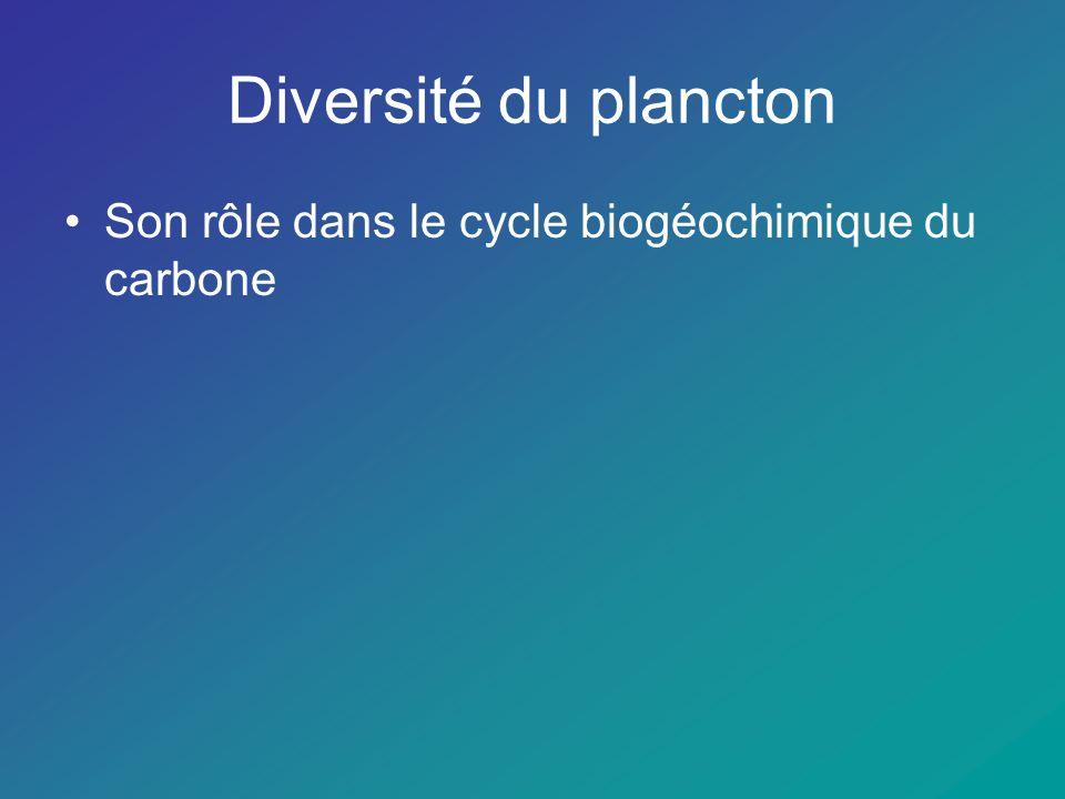 Diversité du plancton Son rôle dans le cycle biogéochimique du carbone