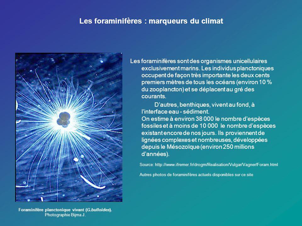 Les foraminifères : marqueurs du climat