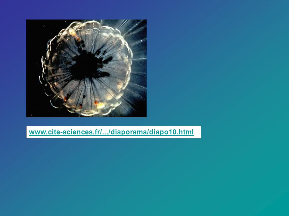 www.cite-sciences.fr/.../diaporama/diapo10.html.