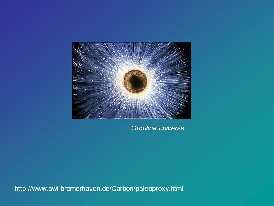 Orbulina universa http://www.awi-bremerhaven.de/Carbon/paleoproxy.html