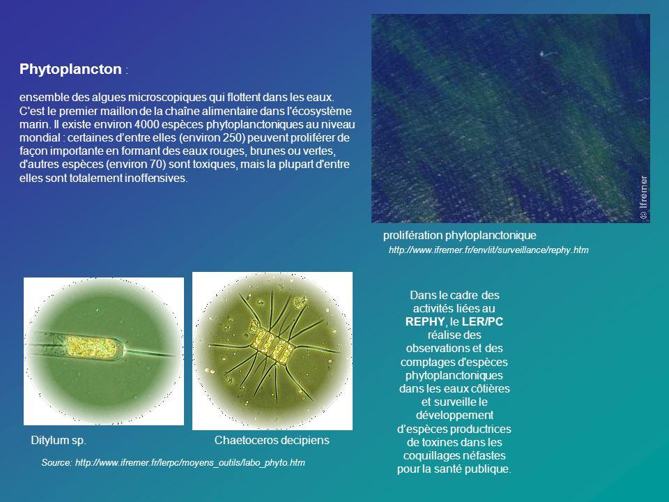 Phytoplancton :