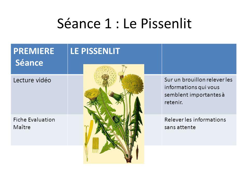 Séance 1 : Le Pissenlit PREMIERE Séance LE PISSENLIT Lecture vidéo